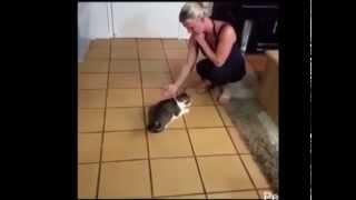 Cute Funny Cat In Dog Training