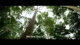 Il était une forêt / Once upon a forest (2013) - trailer EN