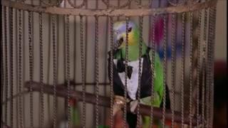Суицид попугая — «Очень страшное кино 2» Лучшие моменты!