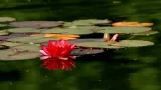 Alliyambal Kadavil Evergreen Malayalam Song