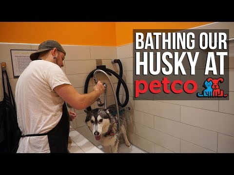 Bathing Our Husky At Petco's Self Washing Station | Vlog 1516