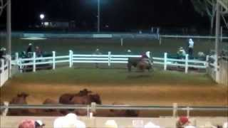 Horseback Riding in Australia - Campdrafting with Stock Horses