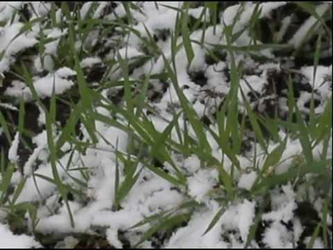danielle-lin-on-wheatgrass