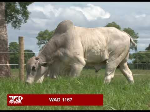LOTE 76 - WAD 1167