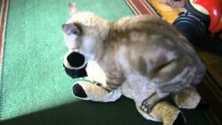 Кот нашел себе секс игрушку
