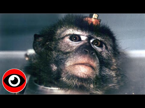 Kindesmisshandlung – Experimente an Affenbabys