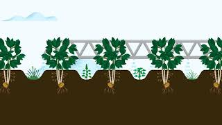 Controlling pests and weeds in potato crops