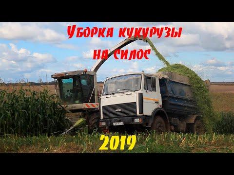 Уборка кукурузы - на силос 2019