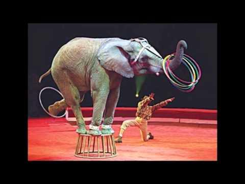 El elefante encadenado reflexion youtube for El elefante encadenado
