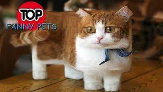 ТОП СМЕШНЫХ ПРИКОЛОВ С КОТАМИ, СОБАКАМИ И ДРУГИМИ ЖИВОТНЫМИ/Смешные кошки – Funny Cats/FUNNY PETS #2
