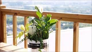 아쿠아팟 수경재배 공기정화기
