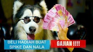 BELIIN DAGING 1 KILO UNTUK SPIKE DAN NALA / GAJIAN !!!  - VLOG