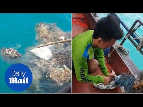Heartwarming Moment Stranded Turtle Is Rescued Form Fisherman's Net