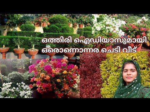 Home garden tour Malayalam /Roshnathayude chedi veed//tips and tricks my garden//
