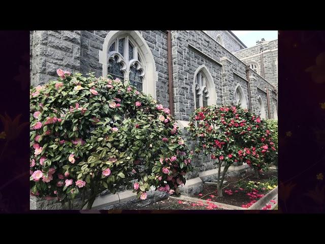 Virtual Choir: Lo, how a Rose e'er blooming