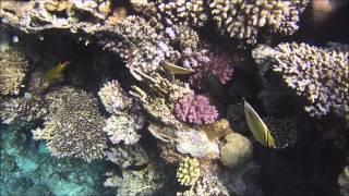 красное море. коралловые рифы 2014
