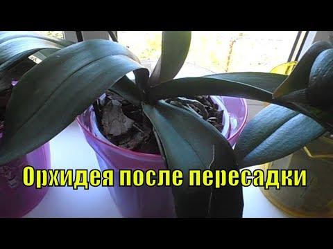 Орхидея после пересадки. Особенности ухода