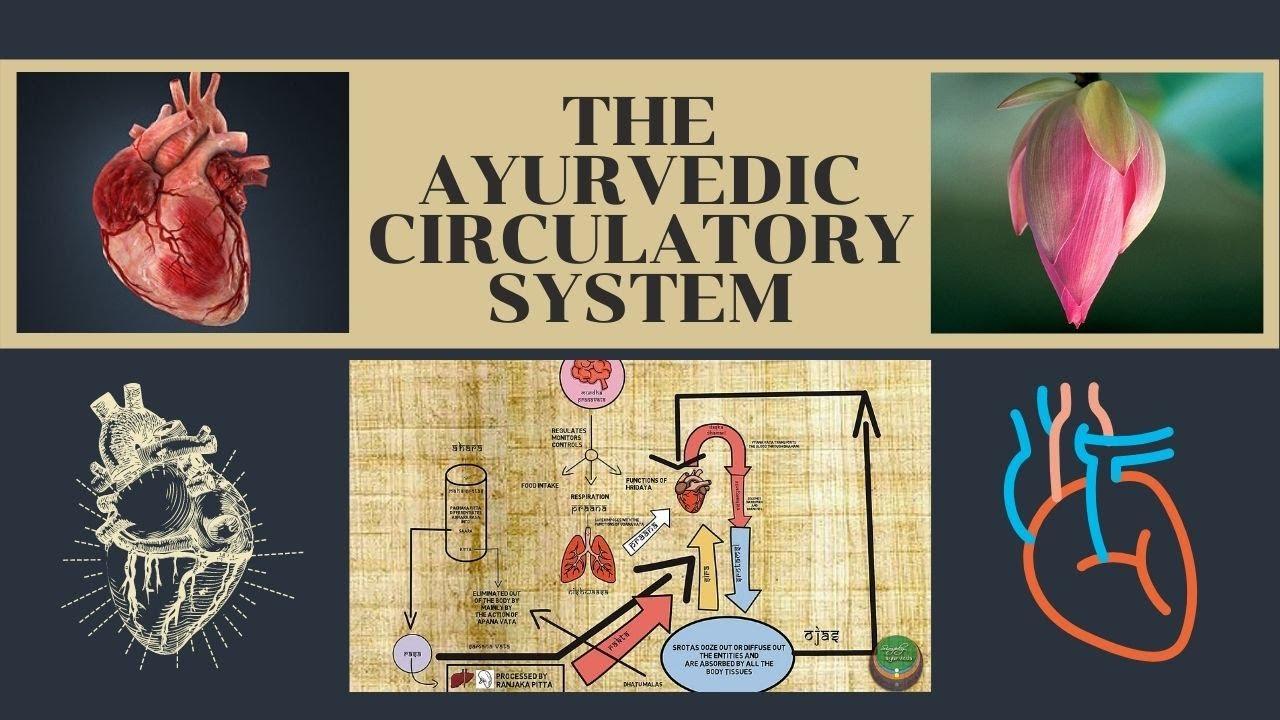 Ayurvedic aspects of circulation
