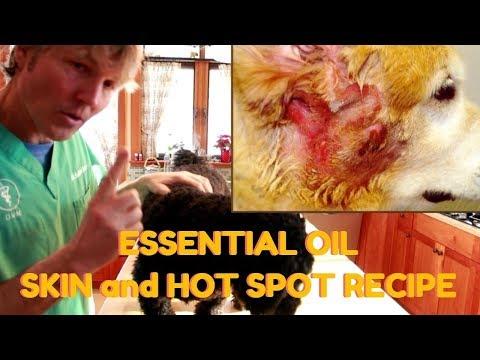 dog-skin-and-hot-spot-essential-oil-recipe