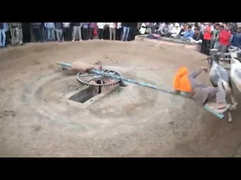 Pind Mazara Dingrian - Halt Diya Dhora At Pind Mazara Dingrian - Part 8