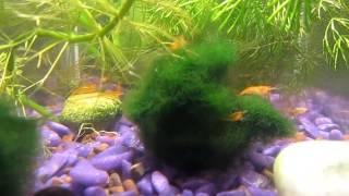 Рыбки с креветками
