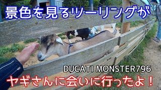 【モトブログ】ヤギさんがいた!のと里山海道別所岳SA