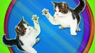 Коты из зазеркалья