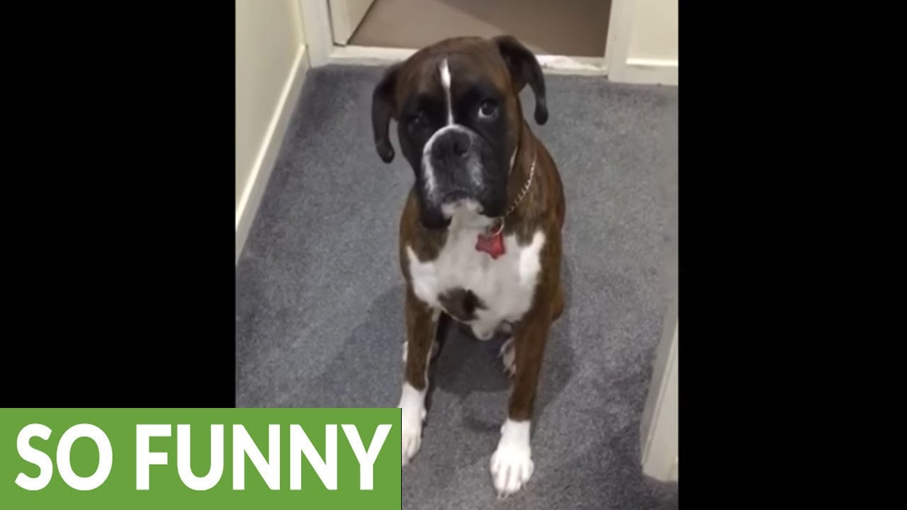 Dog Hates Bath Time Pretends To Be Too Tired Youtube
