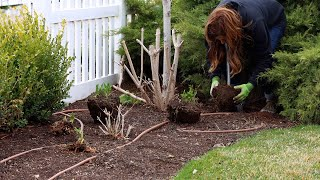 Transplanting Perennials to Make Way For a New Pathway! 🌿💚// Garden Answer