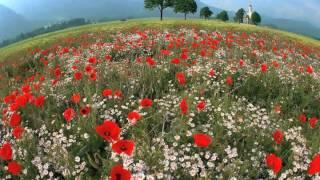 Tom Waits - Flower's grave