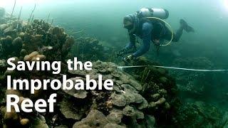 Saving the Varadero coral reef