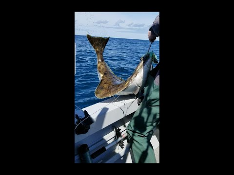First Pacific Halibut Fishing Trip Of 2020 Newport, Oregon