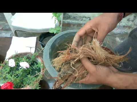 Basic gardening tips for biggners || Episode - 02