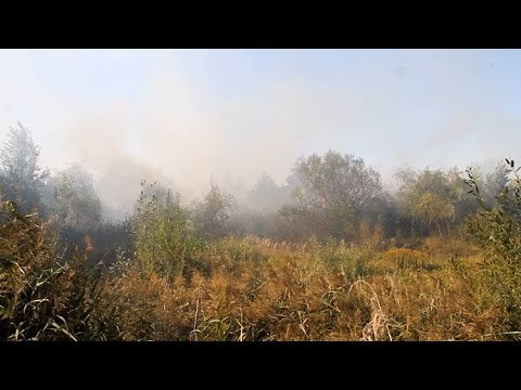 Пожежа на околиці Житомира