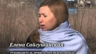 Приют на Московском. Тольятти.