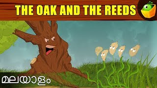 The Oak And The Reeds | Aesop's Fables In Malayalam | Animated Stories