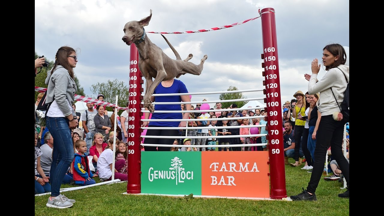 Video Nejvyšší psí skok