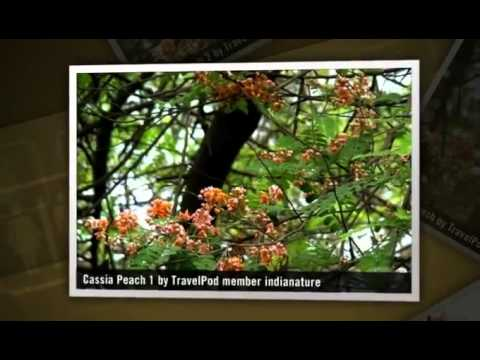"""""""Mid Summer Flora of the Byculla Zoo botanic garden"""" Indianature"""