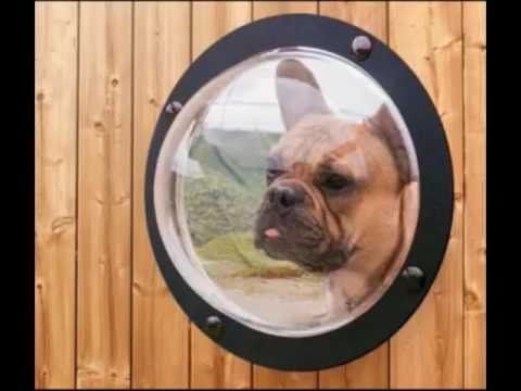 Smart Dogs - Dog help person - Funny Dogs