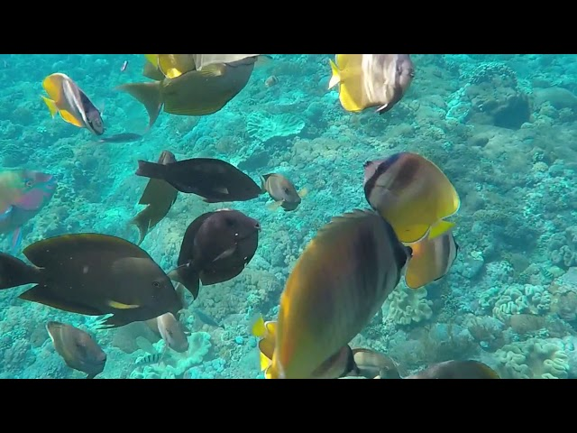 INDONESIA - Snorkeling, Ceningan, Bali