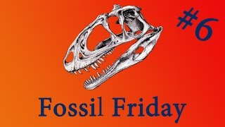 Fossil Friday #6 -