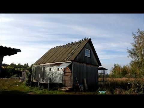 Крупнейший форум для птицеводов, всё о