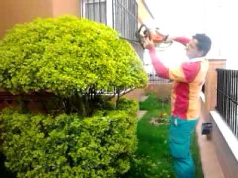 Poda de formacion arte topiario jose miguel rojas mejias for Como podar un ciruelo de jardin