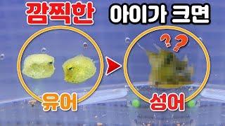 요정같이 깜찍한 물고기가 자라면 이렇게 충격적으로 변한답니다!!