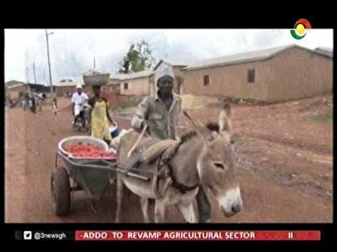 The use of donkeys for transport & farming widespread in the north region -16/1/2017