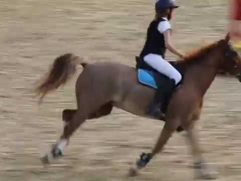 Pony For Ale - Kuc Gr. C (136 Z Certyfikatem)