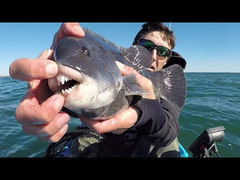 A Smile only Fisherman can Love. Rhode Island Fall Tautog Fishing.