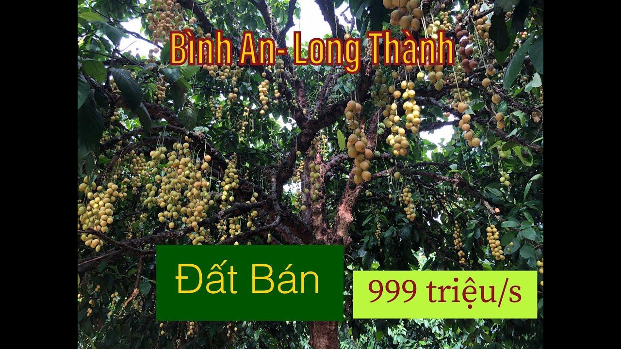 Bán Đất và Vườn Dâu 2713 m2- Bình An Long Thành cách Sân Bay Long Thành 1,5 km #Nhà Đất ĐNB #SHR