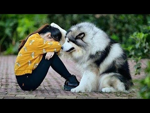 😍 Cute Cats and Funny Dogs Videos Compilation 2018 😍 #27