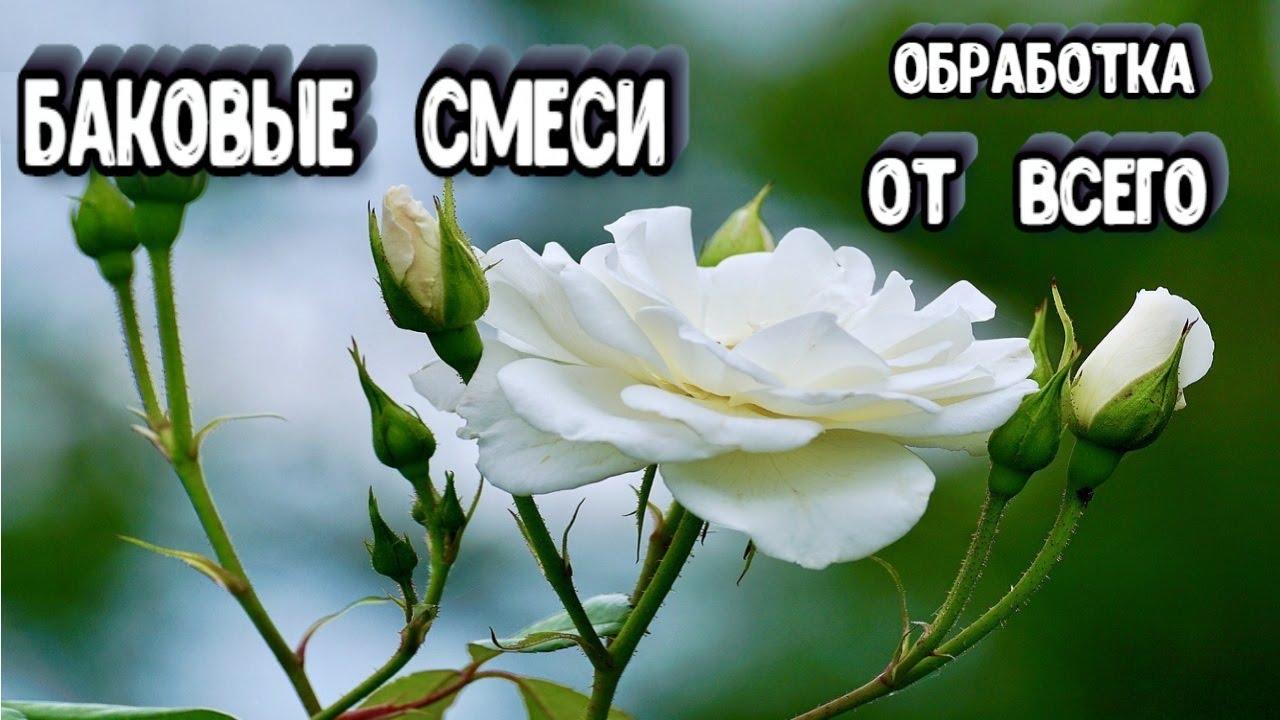 БАКОВЫЕ СМЕСИ Для Роз - Препараты Для Роз - Обработка Роз от ВСЕГО